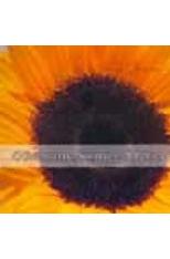 Evangelho-Segundo-a-Poesia-O----CDBook--1png
