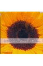 Evangelho-Segundo-a-Poesia-O--CD--1png